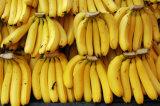 Refrigerador de maduración de los cuartos del plátano