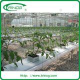 Vegetable를 위한 경제적인 Hydroponic System