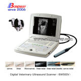 Equine Ultrasound Scanner artificiale Dispositivi per inseminazione