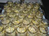 Sprout enlatado do feijão de soja/Sprout de feijão psto de conserva de Mung