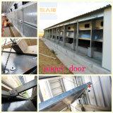 Sistema d'alimentazione principale nella Camera del pollame per la griglia di strato con installazione