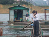 1080P HD Underwater Mini Digital Inspection Camera DVR para Aquaculture
