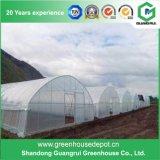 야채와 과일 성장하고 있는을%s 저가 농업 플라스틱 온실