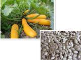 Shine Skin Pumpkin Seeds с высоким качеством и Hot Sale