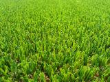 Decoration (E635218GDQ12042)를 위한 정원 Lawn