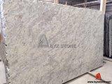 Brames blanches de pierre de granit d'Andromeda pour la partie supérieure du comptoir et les tuiles