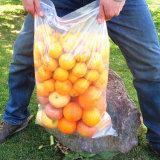 Gemüsefrucht, die transparenten mit Reißverschlussbeutel packt