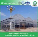 La meilleure serre chaude des prix couverte par Glass pour la plantation