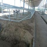 El ganado acobarda cubículos libres del ganado de la parada