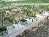 Tomato Nursery를 위해 hydrponic Rockwool