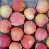 果樹園新しく赤いQinguan Appleからの供給