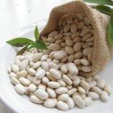 Белая выдержка фасоли почки с Phaseolin для потери веса