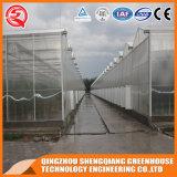 Serre chaude commerciale de feuille de polycarbonate de structure métallique d'agriculture pour la fleur