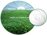 Polvere naturale 80%~98% Stevioside dell'estratto di Stevia del dolcificante