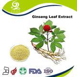 Uittreksel 80% UV van het Blad van de Ginsengen van Acegem Poeder Ginsenosides