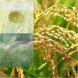 Fertilizante el 52% orgánico del polvo del aminoácido