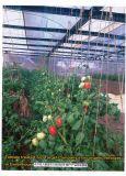 Promotor del crecimiento vegetal para el vehículo