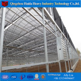 Commercial Large Size Hydroponics Film Green House pour tomate