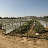 Bayas nativas de Ningxia Wolfberry Goji