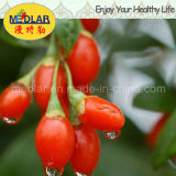 Bacca natale Wolfberry del Ningxia Goji