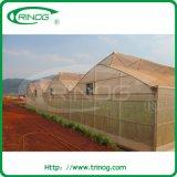 Tropisches Insect Net Greenhouse für Sale