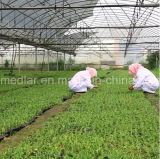 Mispel-organisches Dörrobst-Biokost-Rot Goji