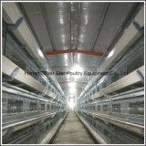 Tipo vertiente del equipo H de la granja avícola del pollo tomatero