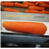 Машина шелушения рыб овоща корней истертости моя/плодоовощ Wahser & Peeler (MSTP-1000)