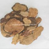 Extrato natural da planta de Multiflorum do Polygonum do 20:1 do 10:1