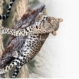 le groupe Pigment&Disperse du léopard 100%Polyester a estampé le tissu pour le jeu de literie