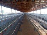 Kalter und heißer galvanisierter Rahmen für Batterie-Schicht-Huhn mit Entlüfter-Maschine