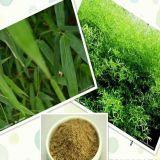 Выдержка Bamboo всходов с кремнеземом 7%Organic для дополнения еды
