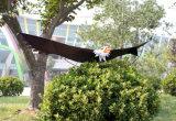 Grandi cervi volanti dell'aquila di vendita calda