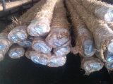 冷たい終了する炭素鋼棒技術的な42CrMo等量