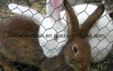 Rede revestida das aves domésticas do PVC com aço de baixo carbono