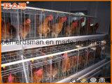 Máquinas automáticas de fazenda de frango com casa pré-fabricada para One-Stop
