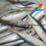 Algemene Grootte Bevroren Vreedzame Makreel (PM013)