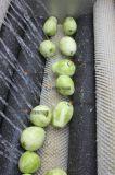 arruela e Peeler comerciais industriais da escova da fruta e verdura 500kg/H