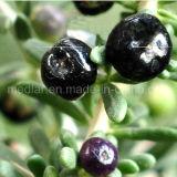 Ягоды черноты продукта здоровья потери веса мушмулы