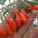 セイヨウカリン2016新しい有機性乾燥されたWolfberry
