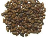 5:1 d'extrait de poudre de Tora de faucille de séné de graine chinoise/casse, 10:1