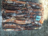 يجمّد أرجنتين الحبّار حجم 32