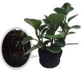 Vrai mini jardin de mur de plantes vertes