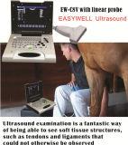 Ветеринарная система Ew-C8V ультразвука Doppler цвета с линейным зондом для малых частей, васкулярно, Musculoskeletal