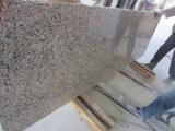화강암 석판 판매를 위한 Polished G563 화강암 돌 도와