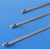 Cintas plásticas revestidas pretas do fechamento da asa do aço inoxidável do PVC