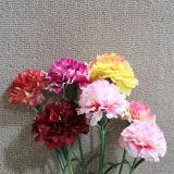 다채로운 가정 훈장 실크 인공 꽃 패랭이속의 식물 Caryophyllus