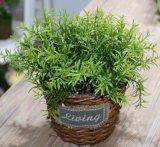 (BC-WF1021) Cesta natural hecha a mano pura de la flor del sauce