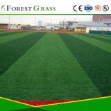Grama do futebol da grama do esporte da grama do futebol (SB)