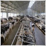Casa de acero galvanizada de la vaca del edificio agrícola de la vertiente de la vaca con alta calidad